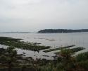 Parcs à huitres à marée basse