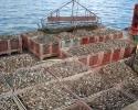 Les huitres - Port Navalo