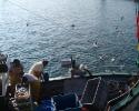 Retour de la pêche à Port Navalo